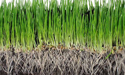 Grass and roots cross section stock photo