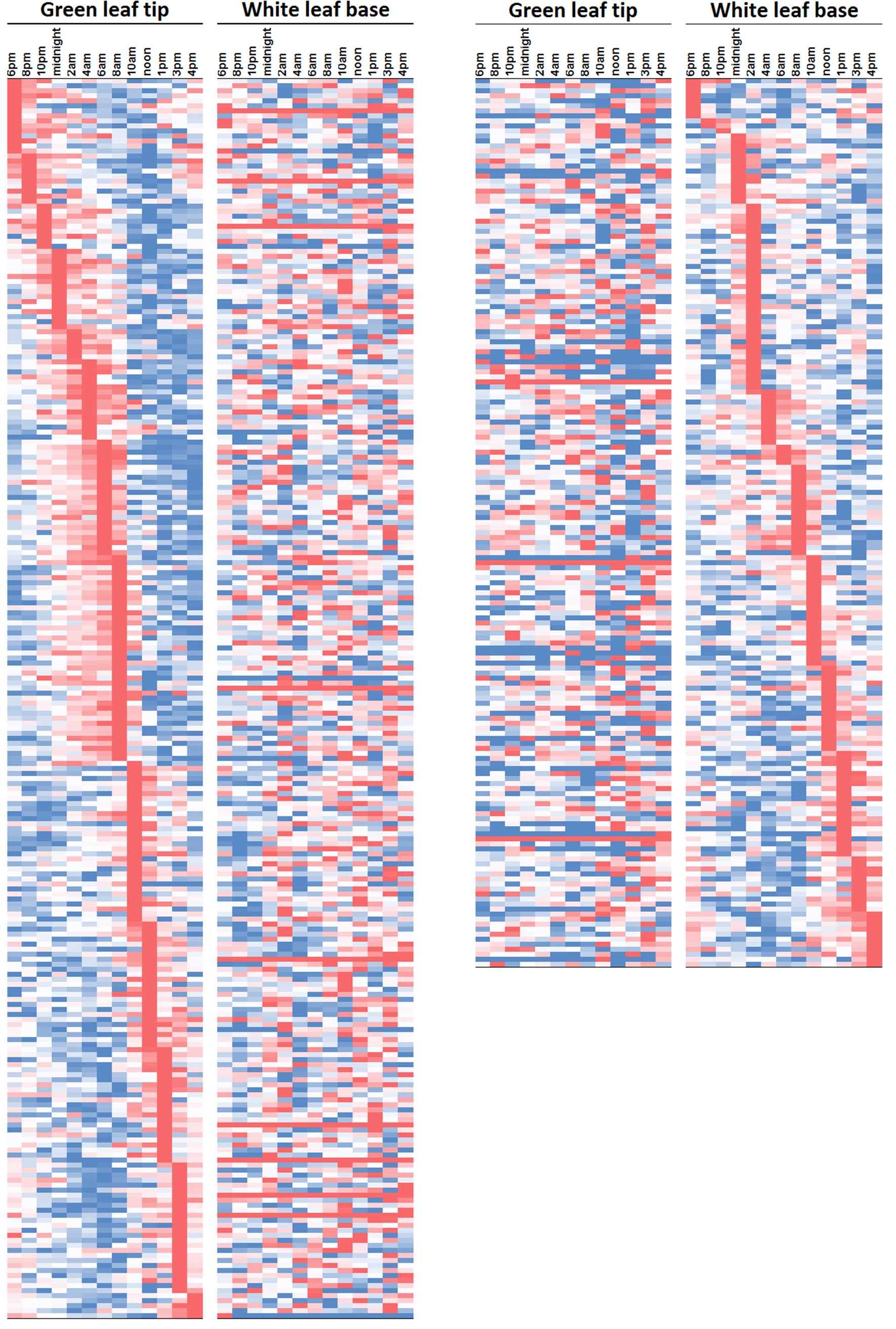 graph showing diurnal gene expression patterns
