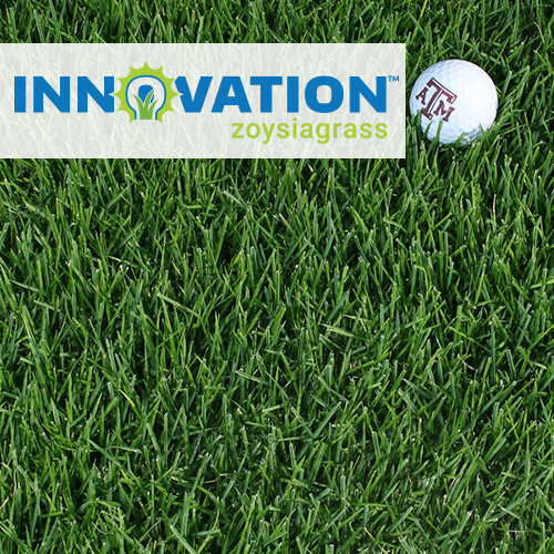 innovation-zoysia.jpg
