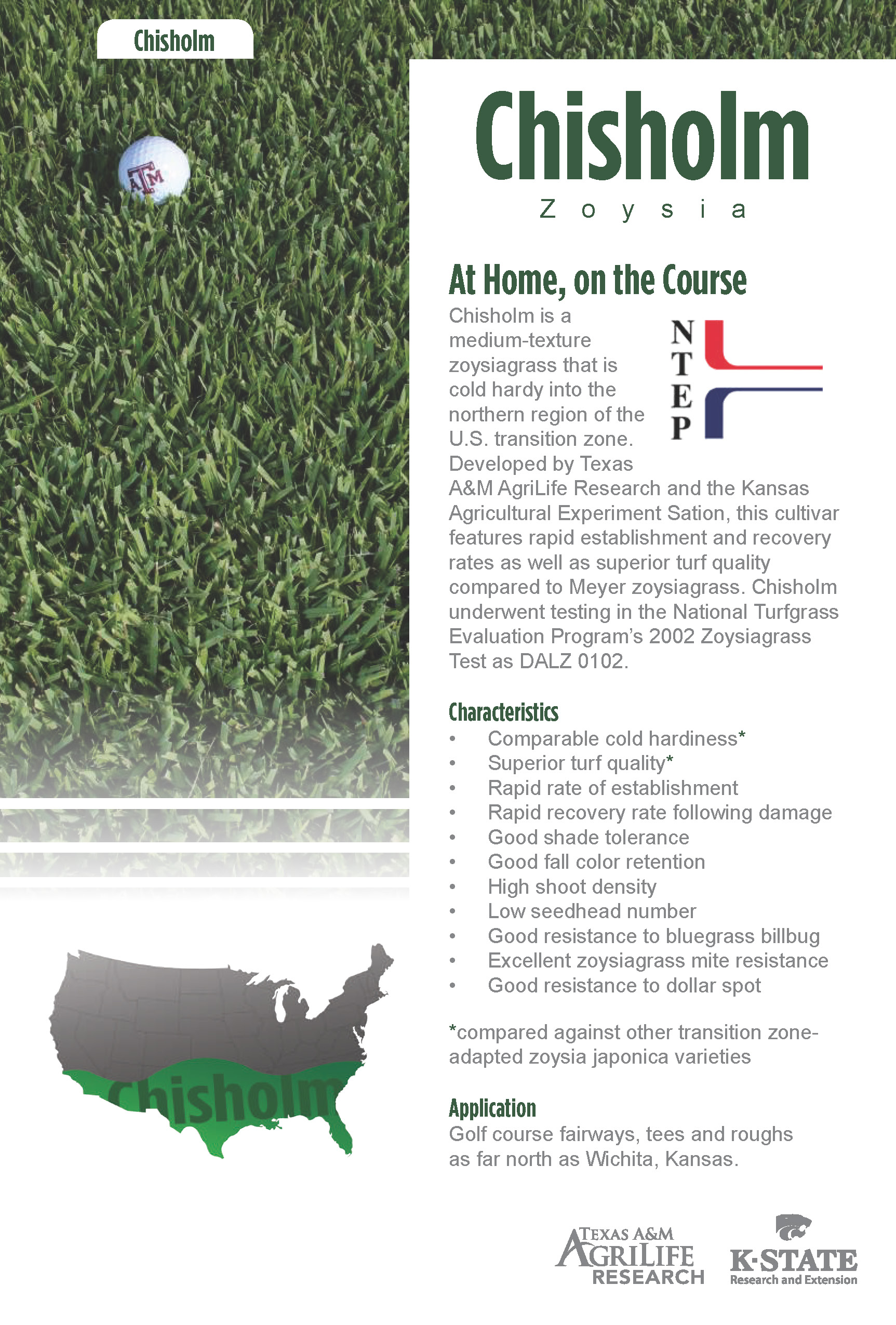 Chisholm Zoysiagrass overview